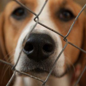 Cs Santa Coloma demanarà en el proper Ple un major control en el funcionament del Centre Comarcal d'Atenció als Animals (CCAAC)