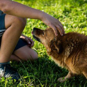 Cs solicita la implantación de un sistema de detección del ADN de las heces de animales domésticos para acabar con la presencia de excrementos en las calles de Santa Coloma
